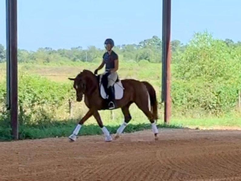 Private Lesson - School Horse
