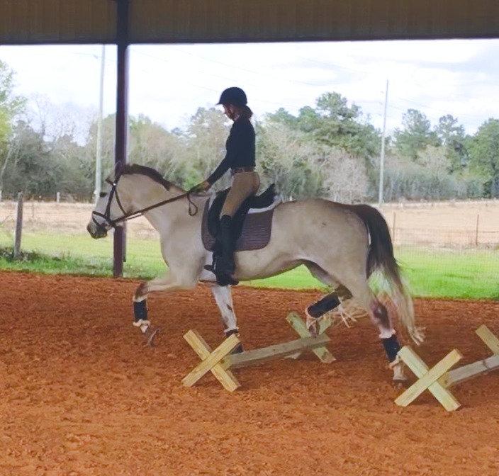 Private Lesson - Student's Horse