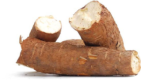 Cassava_pic.jpg