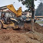 Piantumazione alberi Brianza - Vedano - Monza - Lissone