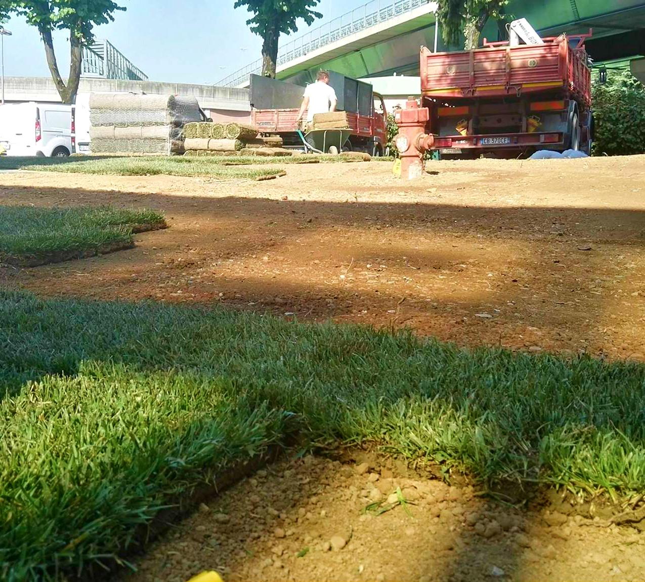 giardino con erba naturale