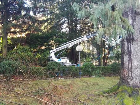 Manutenzione Giardino Biassono - Monza e Brianza
