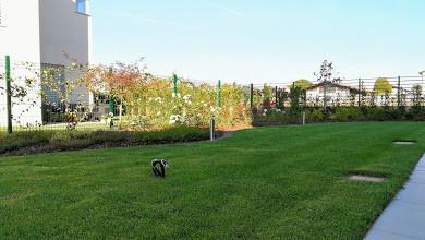 Realizzazione Giardini Monza e Brianza - Prato Naturale - Floricoltura Radaelli & Radaelli