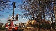 Potatura alberi Lissone - Monza - Vedano al Lambro