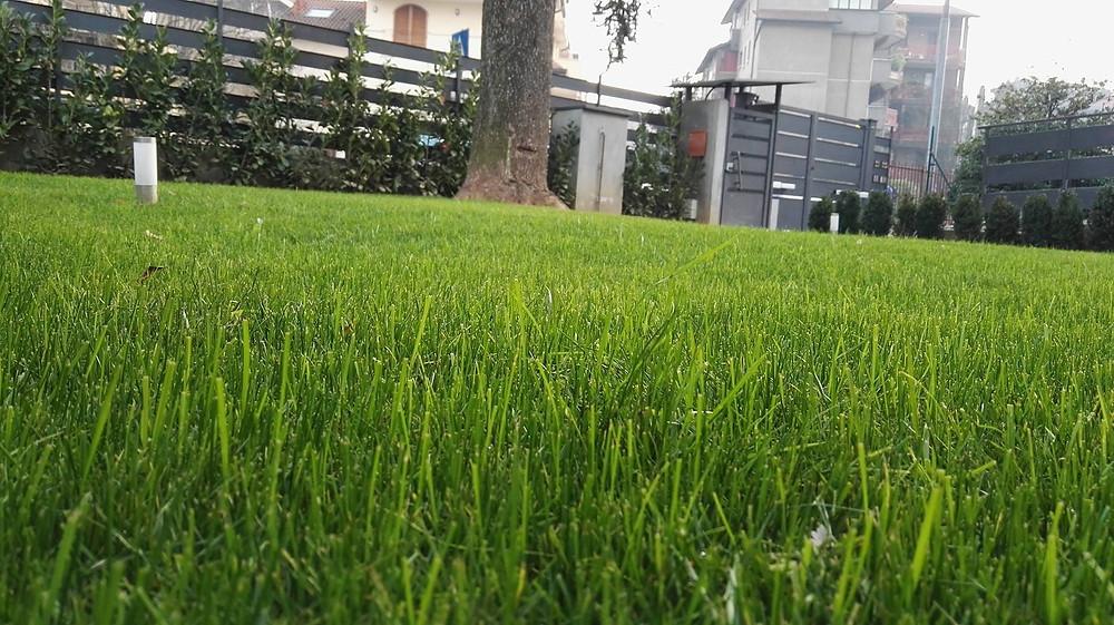 manutenzione giardino brianza
