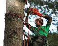 Potatura alberi Monza e Brianza