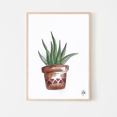Aloe Verra