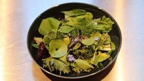 Salade du potager