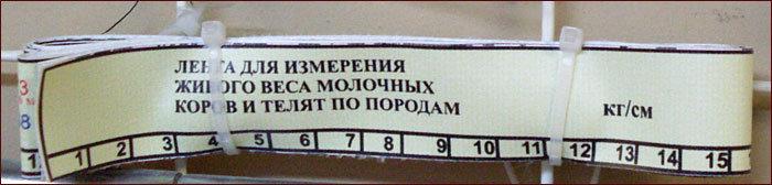 Лента мерная для определения массы тела, мясо-молочные породы