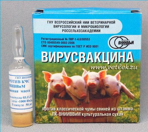 Вакцина чумы свиней
