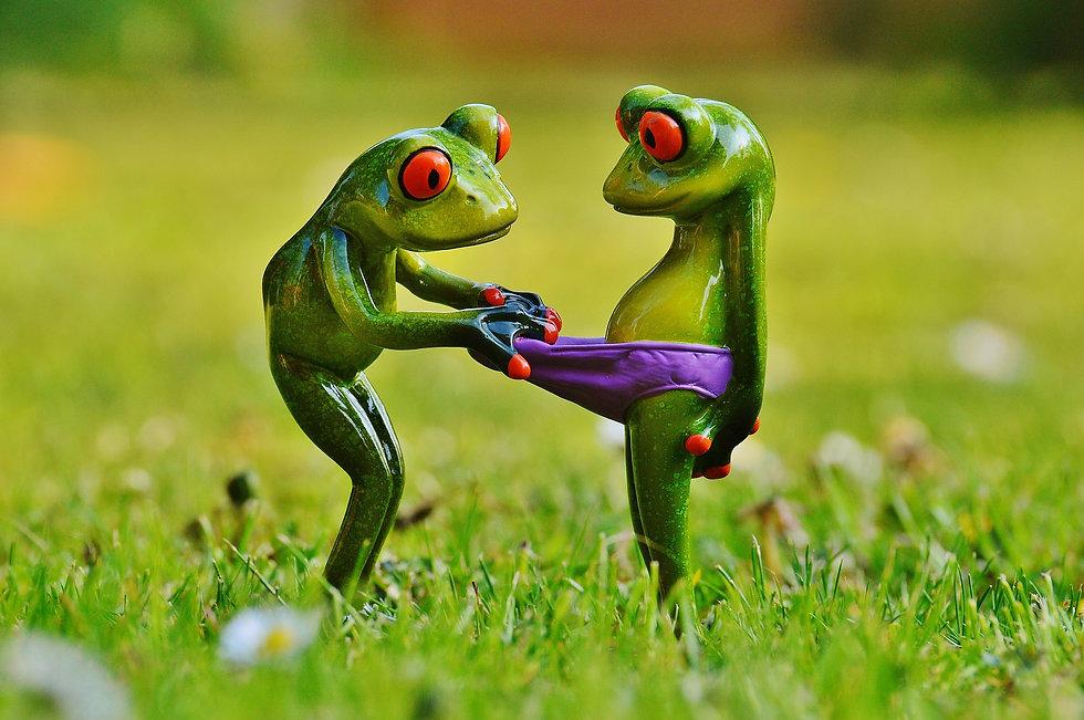 frogs-1347638_1920.jpg