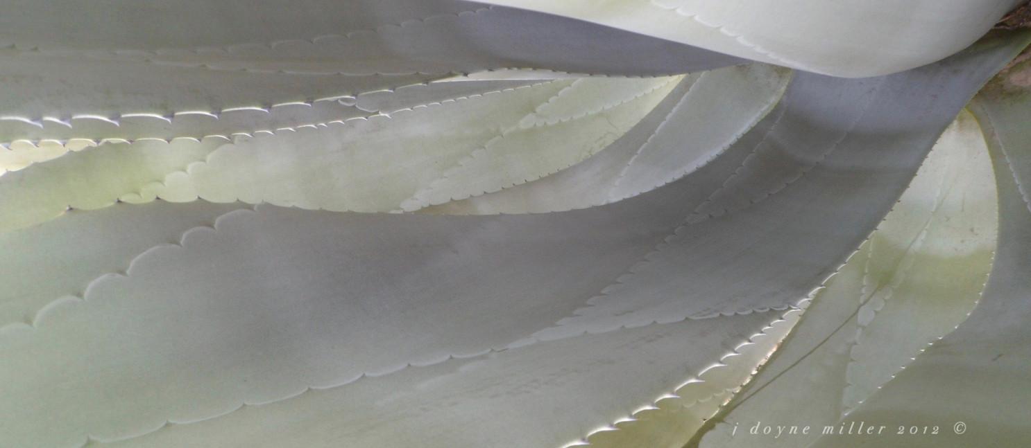 PS Succulents Series 1-1