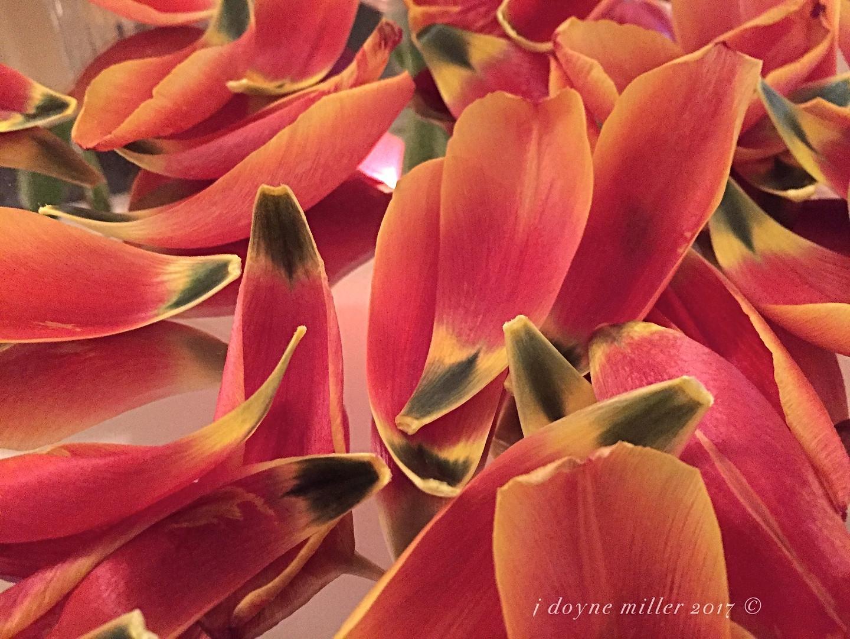 Tulip Series 1-4
