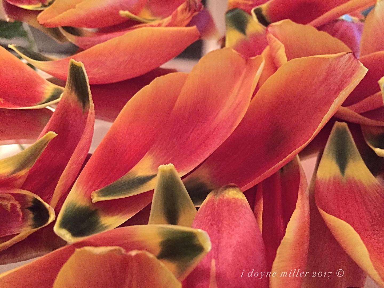 Tulip Series 1-3
