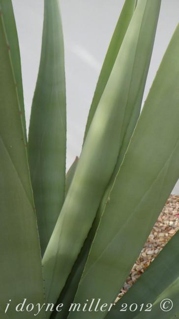 PS Succulents Series 1-9