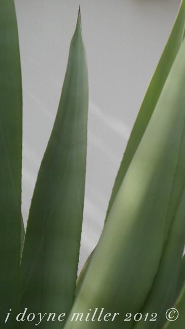 PS Succulents Series 1-13