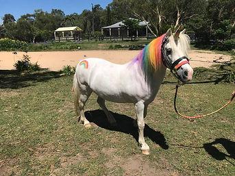 Unicorn Roy 4.jpg