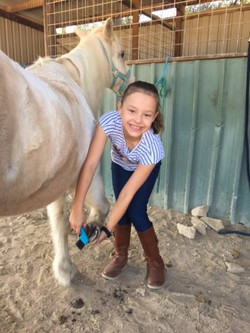 Horsemanship 1