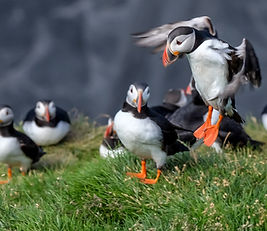 Puffin Tour - 2015-08-07 at 13-47-00.jpg