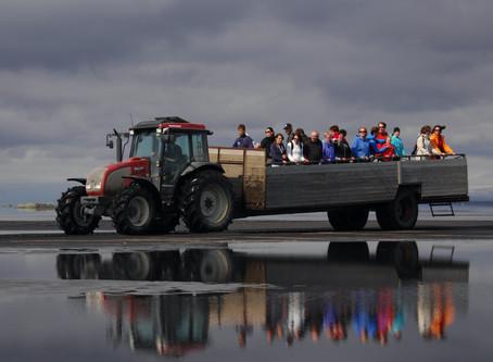 Lundaferðir í Ingólfshöfða