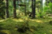 johnstone bay forests alpine