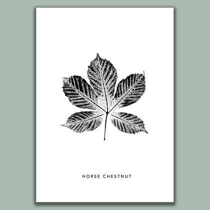Horse Chestnut A4 print