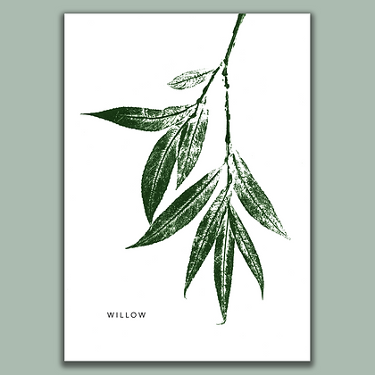 Willow A4 print