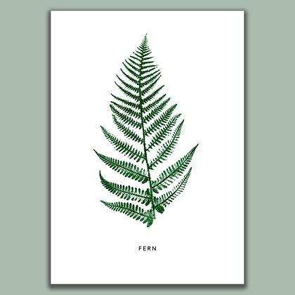 Flourish Fern A4 print