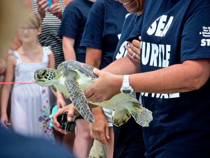 Sea Turtle Release Off Topsail Island
