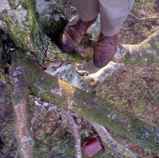 Recreational tree climbing at Vogrie