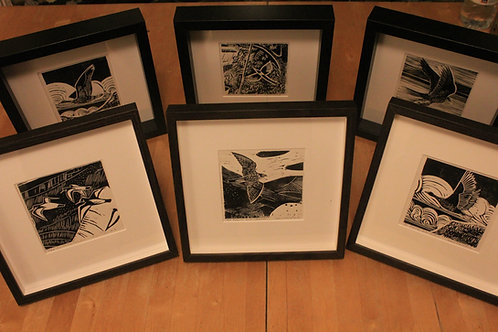 Series of 6 bird prints