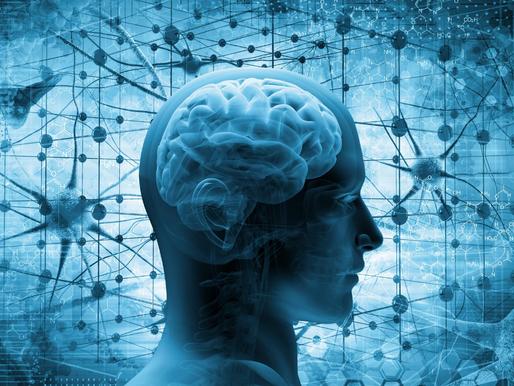 Cerebros digitales: la neurociencia del aprendizaje