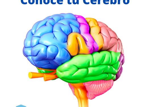 Conoce tu Cerebro