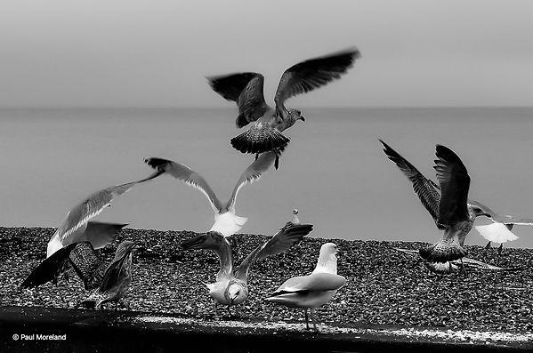 Gull's.jpg