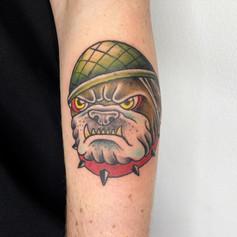 Tom McMahon Tattoo Traditional Bull dog Gold Coast Tattoo