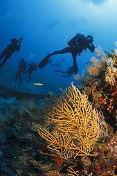 Deep Blue Dive in Bermuda