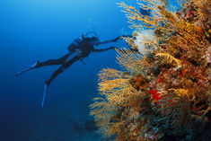 Dive in Caribbean, Corals
