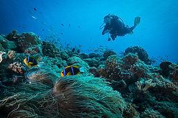 Saba Island Deep Dive