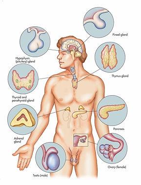 Γενικός Χειρουργός Δημήτριος Γκιουζέλης - Παθήσεις Θυρεοειδούς & Ενδοκρινών Αδένων