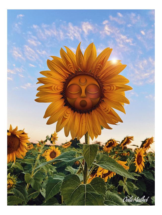 Sunflower (12x16).jpg
