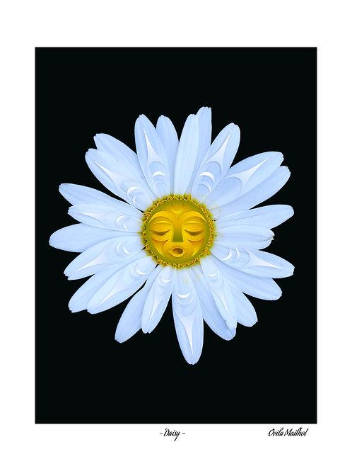 Daisy (16x20) Giclee Print