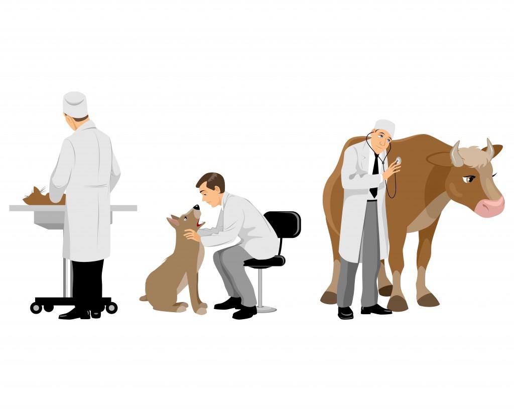 veterinario-ilustracao-veterinaria-atual-1024x819