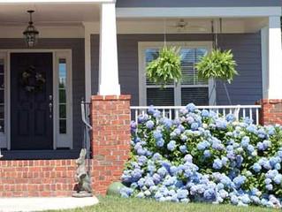 Floral Friday :: Hydrangea