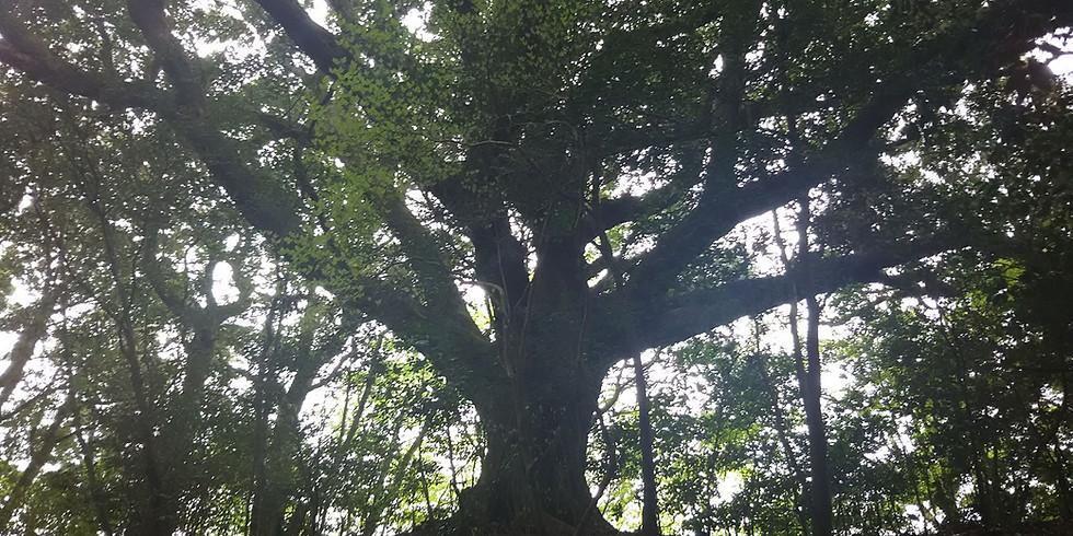 『森のように生きる』出版記念 スペシャルトークセッション『森のような経営とは』 (1)
