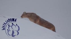 puma-en-nieve