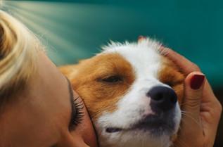 Adopted Dog.jpeg