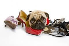 I can't exercise because my Dog ate my trainers.....