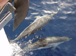 photos dauphins