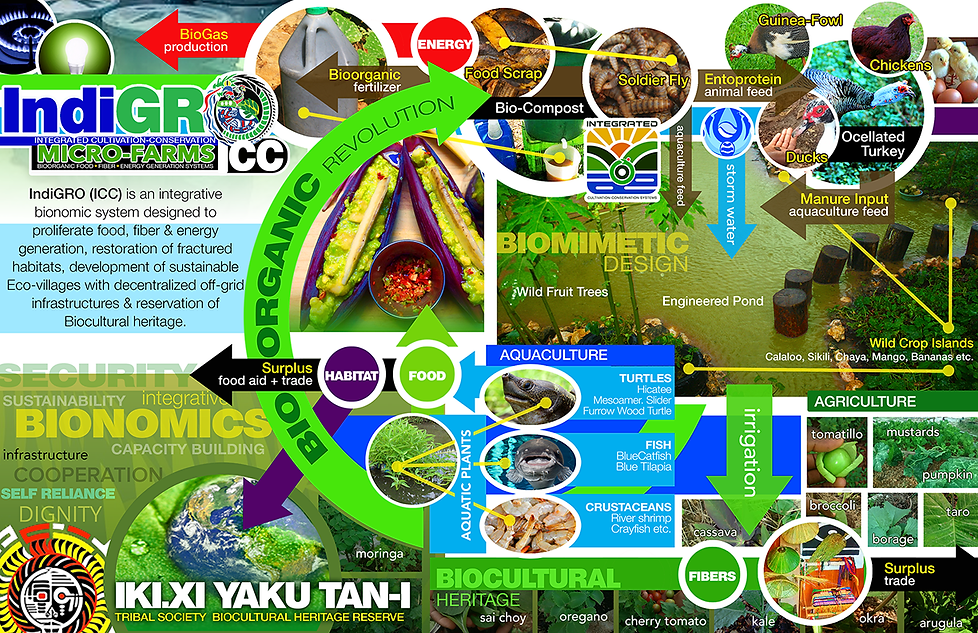 indiGRO ICC Infographic 72dpi.png
