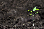 soil-with-plant-sprout.jpg